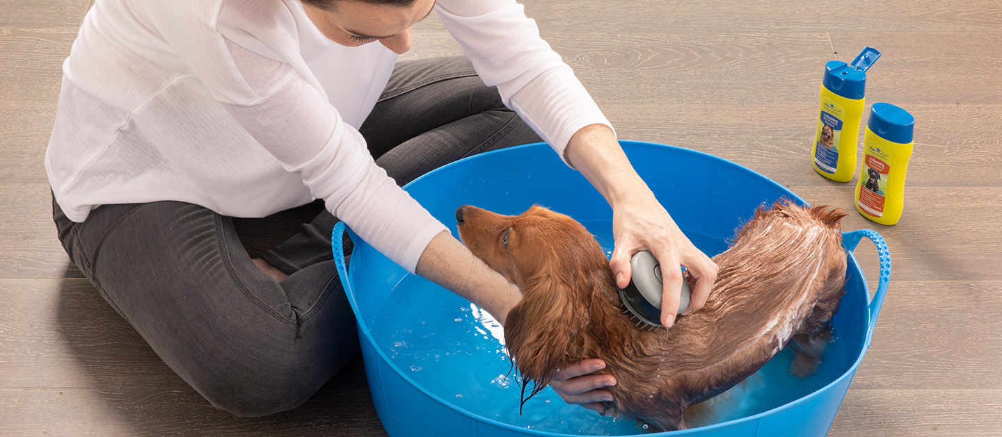 How to bathe your dog
